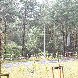 Jak pogoda to do lasu