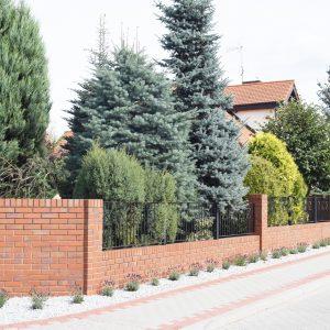 Lawendowe drogi w Kowanówku