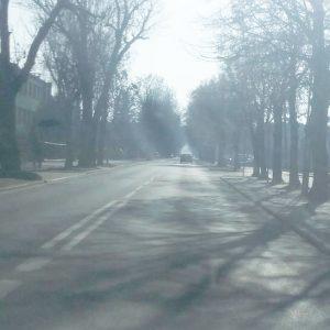 Konflikt lamp z drzewami i plany na rok przyszły
