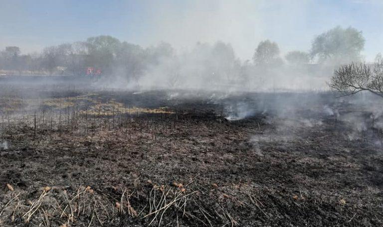 Groźny pożar łąk w Krosinie