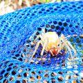 Jadowity pająk w lasach powiatu obornickiego