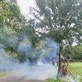 Ktoś podpalił drzewo